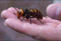 Rawat Sakit Kena Sengat Tebuan Atau Lebah